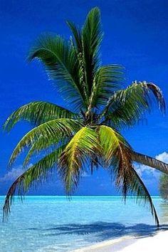 Relocate...St. Pete Beach ❇