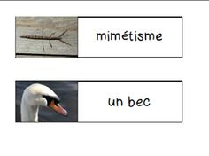 Primary French Immersion Resources: Les adaptations des animaux
