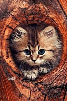Cute Things for Cats