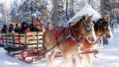 Sleigh Rides Thanksgiving weekend and EVERY Saturday In December. Call the Chamber at 1-800-359-6315 Happy Christmas Memories to be made.