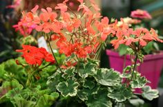 Planting a garden always feels like a bit of a gamble. We're taking the guesswork out of it!