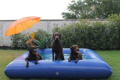 The Ultimate Dog Pool - Buy A Dog Pool
