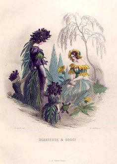 NY Public Library Digital Collections fleurs animées 42. Scabieuse & Souci. [Mourning bride and Marigold]