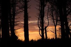 Silhouettes Silhouettes, Celestial, Explore, Sunset, Photography, Outdoor, Outdoors, Photograph, Fotografie