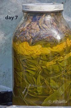 Riihivilla, Dyeing with natural dyes: Solar dyeing with goldenrod and mystery Aurinkovärjäys piiskujen lehdillä ja mysteeri