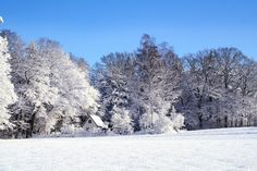 Winter Landscape Snow Cold Wintry Snowy Re Free Pictures, Free Photos, Free Images, First Day Of Winter, Winter Time, Winter Season, Arctic Blast, Deep Winter, Color Psychology