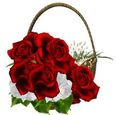 PNG Sector: Search results for rose Red Rosa, Vases, Rose Basket, Boarder Designs, Decoupage Printables, Minnie Png, Beautiful Red Roses, Telegram Stickers, Christmas Wreaths