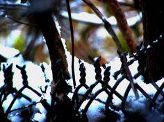 Snow Wire 2