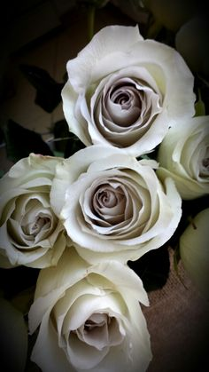 Earl grey roses. Light grey rose with a lavender hued center.