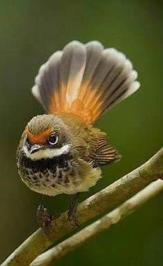 Exotic pets 649362840010278384 - Source by Cute Birds, Pretty Birds, Beautiful Birds, Animals Beautiful, Cute Animals, Exotic Birds, Colorful Birds, Exotic Pets, Vogel Gif