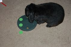 Many different toys on the market for keeping bunnies entertained :)