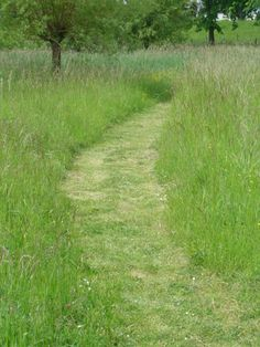 Serpentine path through the meadow. A soft, natural carpet.Uhm, maybe, I don't have to mow for the season? Hillside Garden, Meadow Garden, Dream Garden, Garden Path, House Landscape, Landscape Architecture, Landscape Design, Garden Design, Wild Flower Meadow