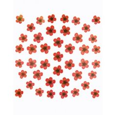 Dry flower design collection of nail art