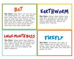 Wild Kratts Fun Facts Birthday Treats