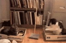 10 Gifs of Hilarious Cats That Will Have You Laughing All day