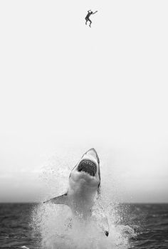 shark playing