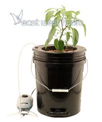 Titan Controls Flo N Gro Gro Momma Bubbler Bucket System - Dwc Grow Hydroponics Hydroponic Grow Systems, Hydroponic Growing, Hydroponics System, Hydroponic Gardening, Grow Room Design, Mother Plant, Growing Grapes, Pot Lids, Planting Vegetables