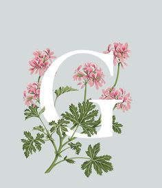 An A-Z of Edible Flowers by Charlotte Day, via Behance