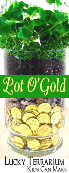 Pot O' Gold Terrarium Kids Can Make for St. Patrick's Day