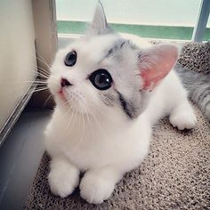 Cute Kittens Run For Cover Cute Cats And Kittens Cartoon Pretty Cats, Beautiful Cats, Animals Beautiful, Beautiful Images, Beautiful Lines, Cute Images, Beautiful Babies, Cutest Kittens Ever, Cute Cats And Kittens
