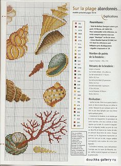 Various Shells 2/2