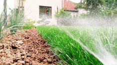 SISTEME DE IRIGATII Pop Up, Herbs, Lawn, Plant, Popup, Herb, Medicinal Plants