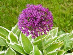 Flowerific