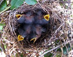 Mocking Birds at 1 week Mocking Birds, Beautiful Things, God, Heart, Color, Dios, Colour, Allah, Hearts