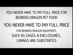 Bearded Dragon Food List Great Info