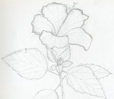 How to draw a hibiscus.