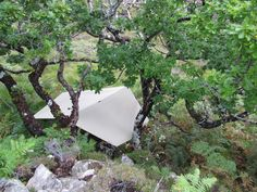 Tarp from above - suspended by spreading oak. | Flickr - Photo Sharing!