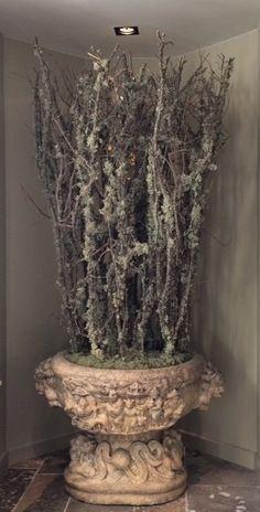 LARIX  www.facebook.com/pages/Krijnen-wealth-of-flowers/1409308935965781