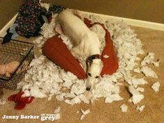 """Someone has been having a good time :)or """"I finally got this new bed comfortable!"""""""