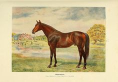 The new book of the horse /. London :Cassell and Co.,1911 (Free Printable)