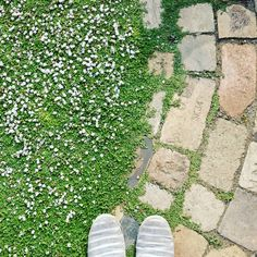 ひと雨ごとに緑が濃くなる、、、 #庭 #ナチュラルガーデン #ガーデニング #レンガの小径 #レンガ #グランドカバー #クラピア #リッピア #ヒメイワダレソウ #ペイビング #garden #di - supershf