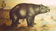 Diprotodon sp.