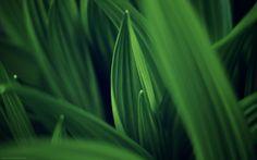 Green Wallpapers [Wallpaper Wednesday]