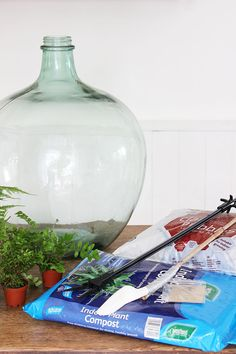 How to plant up a closed carboy bottle terrarium Bottle Terrarium, Fairy Terrarium, Bottle Garden, Bottle Plant, Bonsai Art, Bonsai Garden, Self Sustaining Terrarium, Closed Terrarium Plants, Plant In Glass