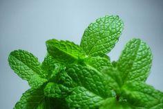 The benefits of mint http://andreeaonose.wordpress.com/2013/06/10/mint/#more-466