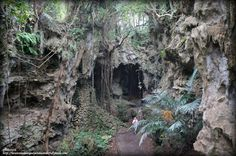 Beautiful rock formations showing the Valley of Gangala in Okinawa, Japan to be a cave once.