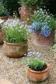 Pebble Garden, Gravel Garden, Garden Pots, Garden Shrubs, Garden Bed, Shade Garden, Gravel Patio, Pea Gravel, Easy Garden