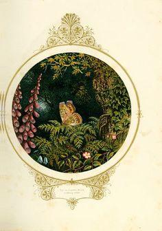 Fairy Mary's dream
