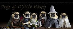 Blue, Roxy and Bono the pugs as Lord of the Rings characters : THE PUGS OF MIDDLE EARTH