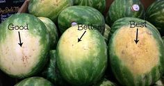 Watermelon is one fruit that is rich in benefits, especially for pregnant women. This fruit contains mostly water, very fresh to be consumed during the day. How to pick a sweet watermelon? Ripe Fruit, Fresh Fruit, Sweet Watermelon, Picking Watermelon, Cutting A Watermelon, Watermelon Hacks, Fruit Picking, How To Choose Watermelon, Watermelon Ripeness