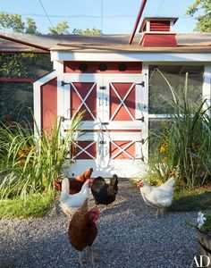 Chickens outside the coop | archdigest.com