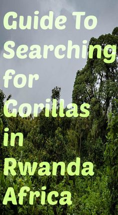 Preparation Guide for Gorilla Trekking in Africa. Preparation includes thinking about the different terrains ranging from tall bamboo forests with soggy clay footing to green vine covered jungles with unforgiving stinging nettles.  Add to that the moving weather conditions where it can be rainy one moment and sunny the next. Read the full blog post at http://www.divergenttravelers.com/preparation-guide-gorilla-trekking-africa/