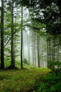 hypnotiserende bossen van Slovenië