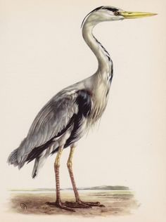 Lovely Vintage HERON Print BIRD Print Vintage Bird Beach House Decor 2517 #Vintage