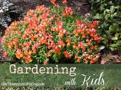 With spring upon us, I thought gardening with kids would be a great topic. If you have some other links to gardening activities for kids ... please post it as a comment.   Click on any image to get more info.                     Growing Worms - Kids will love this!    . . If you would like ...