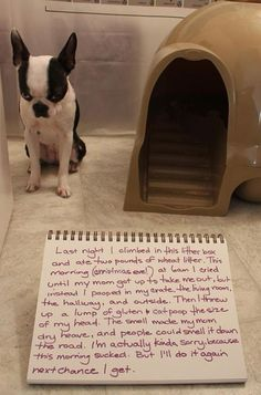 funny dog shaming - Dump A Day Funny Shit, Funny Cute, The Funny, Funny Humor, Super Funny, Funny Animal Pictures, Funny Animals, Cute Animals, Animals Dog